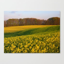 Blooming in yellow 8 Canvas Print
