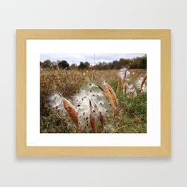 FALL MILKWEED (Whiting Road Nature Preserve, Webster, NY) Framed Art Print