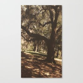 Tree heart in Historic Avadale Jacksonvll Florida Canvas Print