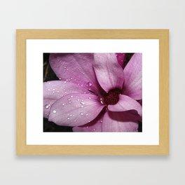 Japanese Magnolia After the Rain Framed Art Print