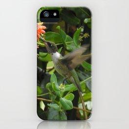 Hummingbird in Trumpet Honeysuckle iPhone Case