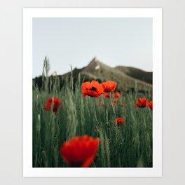 Poppies popping at Chautauqua Park Art Print