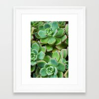 succulents Framed Art Prints featuring Succulents by Michelle McConnell