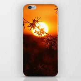 Bittersweet Silhouette iPhone Skin