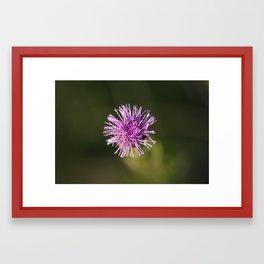 Pink button Framed Art Print