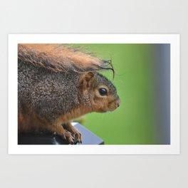 Squirrel in the Rain Art Print