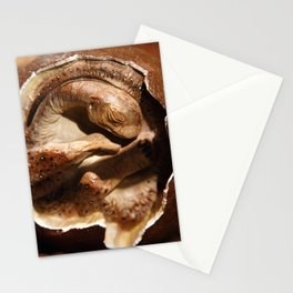 Dinosaur egg with embryo Stationery Cards