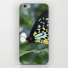 Cairns Birdwing Butterfly iPhone Skin
