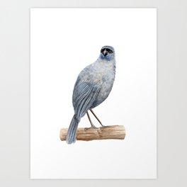 Kokako - a native New Zealand bird 2013 Art Print