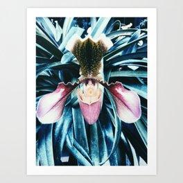 Orchid Passion Art Print