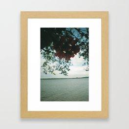 Flowers in the Water Framed Art Print