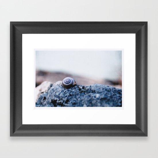 Snail Shell Framed Art Print