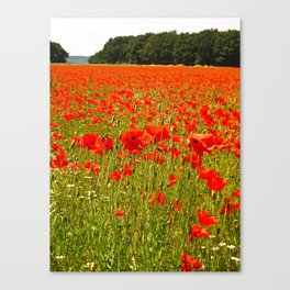 Sea of Normandy Poppies Canvas Print