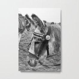 Joey the Donkey Metal Print