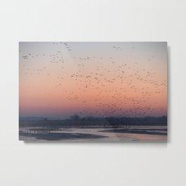 Sandhill Cranes at Sunrise on the Platte River Metal Print