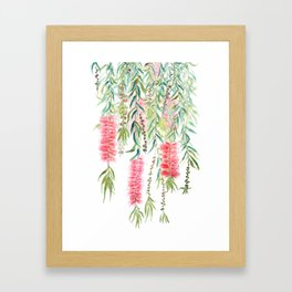 bottle brush tree flower Framed Art Print