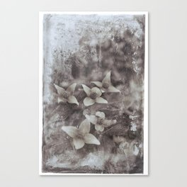 Dogwood at Stonefields Canvas Print