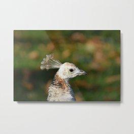 White Peacock Portrait Metal Print