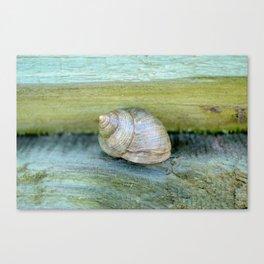 Ocean Snail Canvas Print