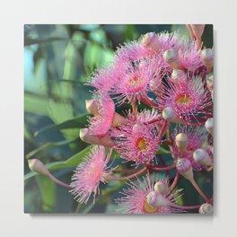 Pretty Pink Corymbia Metal Print