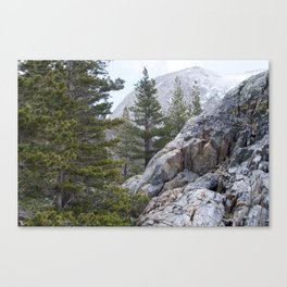 Trees in Yosemite  Canvas Print