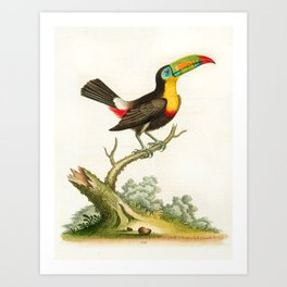 Yellow-breasted toucan by George Edwards, 1761 (benefiting The Nature Conservancy) Art Print