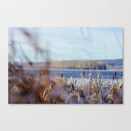 through the frozen grass Canvas Print