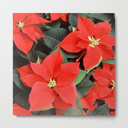 Beautiful Red Poinsettia Christmas Flowers Metal Print
