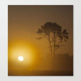 Rising Sun And Tree Canvas Print