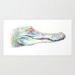Albino Alligator Art Print