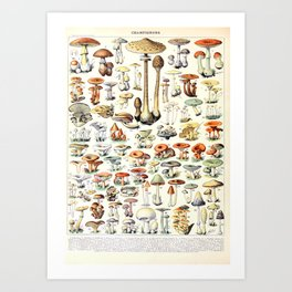 Adolphe Millot - Champignons B - French vintage poster Art Print