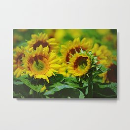 We are like sunflowers turning towards beautiful moments Metal Print