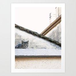 Cat on the Roof Art Print