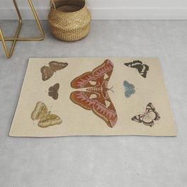 BUTTERFLIES ATLAS Moth LEPIDOPTERA - Pieter Cramer Hanging Wall Art Decor Natural History Print Rug
