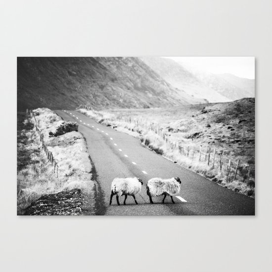 Irish Sheeps Canvas Print