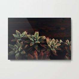 succulent cactus Metal Print