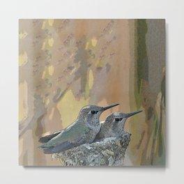 Pair of Anna's Hummingbird Fledglings Metal Print
