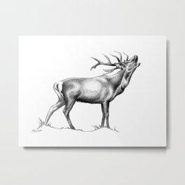 Red Stag Roaring 2 Metal Print