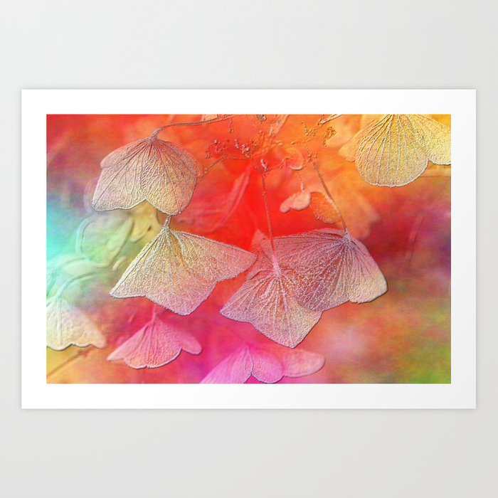 Withered hydrangea Art Print
