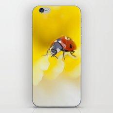 Little Lady iPhone & iPod Skin