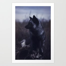 Dark Fox Art Print