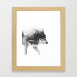 Wolf Stalking Framed Art Print