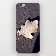 Fallen Leaf iPhone & iPod Skin