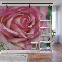 Pink Rose Close Up Wall Mural