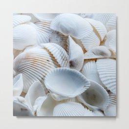 White Seashells Metal Print