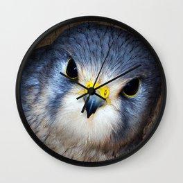 Kestrel in close-up Wall Clock