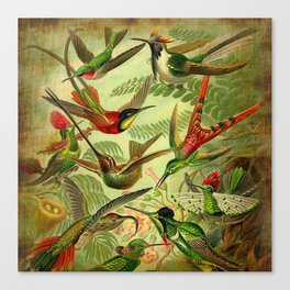 HUMMINGBIRD COLLAGE- Ernst Haeckel Canvas Print