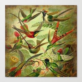 HUMMINGBIRD COLLAGE- Ernst Haeckel Canvas Print