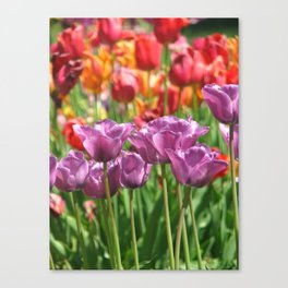 Spring is in Bloom Canvas Print