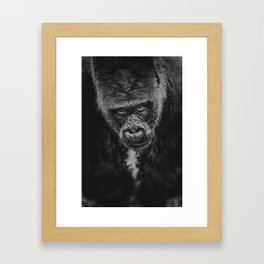 GORILLA STARE 2 Framed Art Print